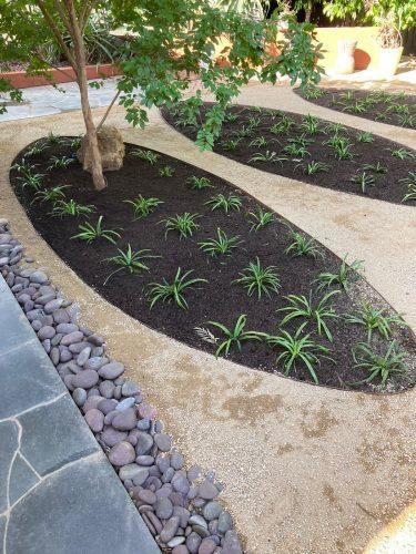planting in Australian garden