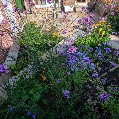 Terraced back garden and Bee friendly planting, Cookridge, Leeds