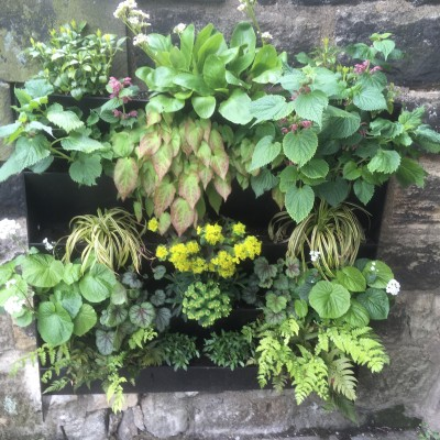 Green wall planter, for shade with interesting variety of plants