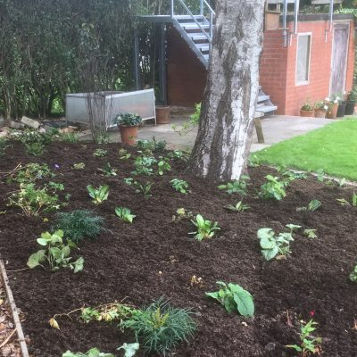 Planting begins