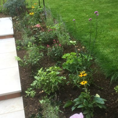 planting of bee friendly plants