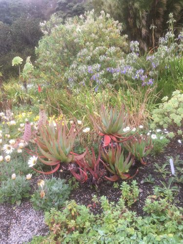 Exotic planting in Inverewe Garden